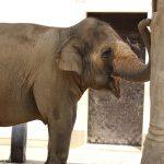 王子動物園のゾウさん
