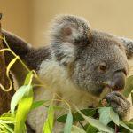王子動物園 パンダとコアラに出会える日本唯一の動物園