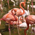 王子動物園のフラミンゴさん
