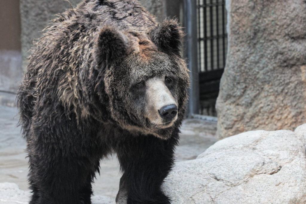 王子動物園のウマグマ