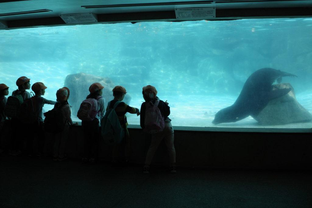王子動物園のアシカ舎