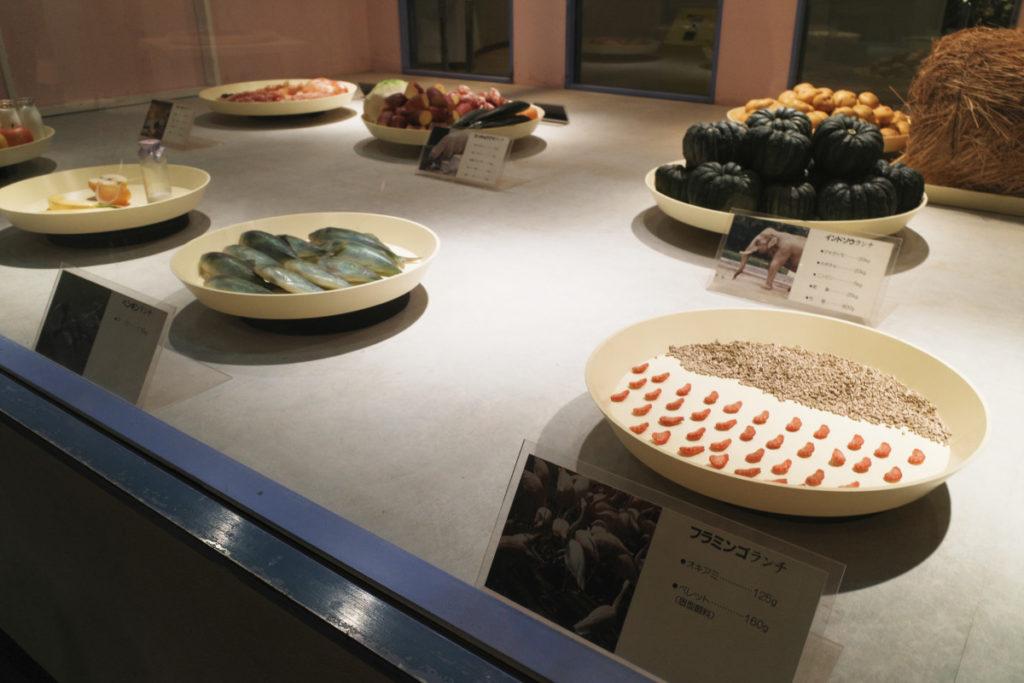 動物科学資料館の展示|神戸市立王子動物園
