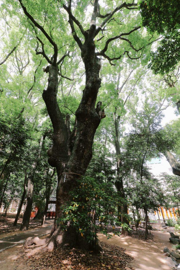 生田神社の森