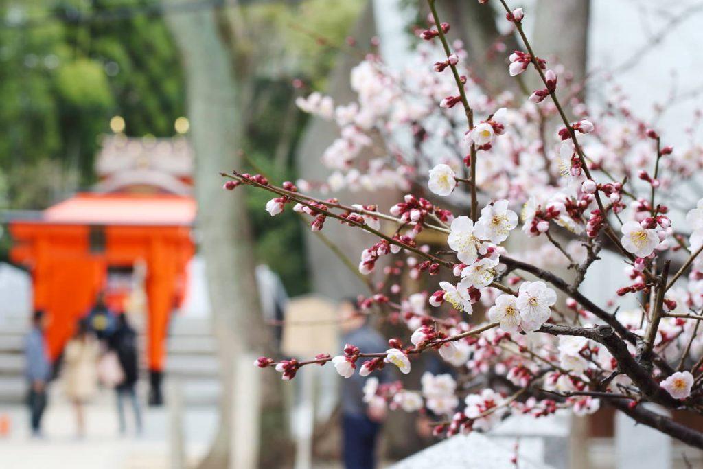 生田神社の梅
