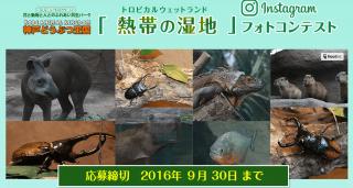 神戸どうぶつ王国 熱帯の湿地のフォトコンテスト