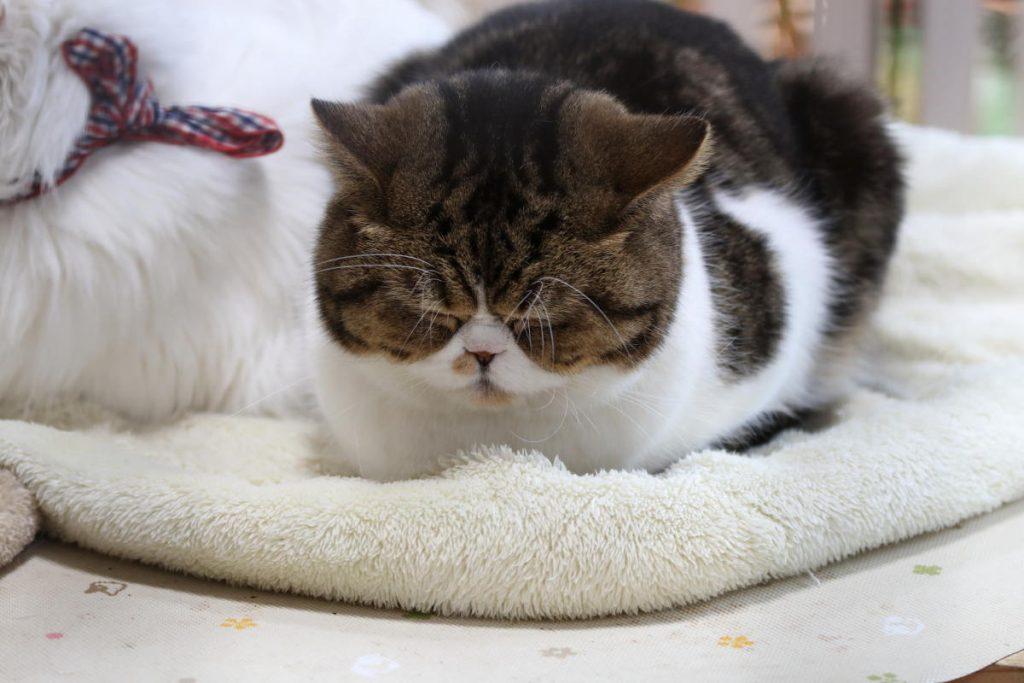 神戸動物王国の猫ちゃん