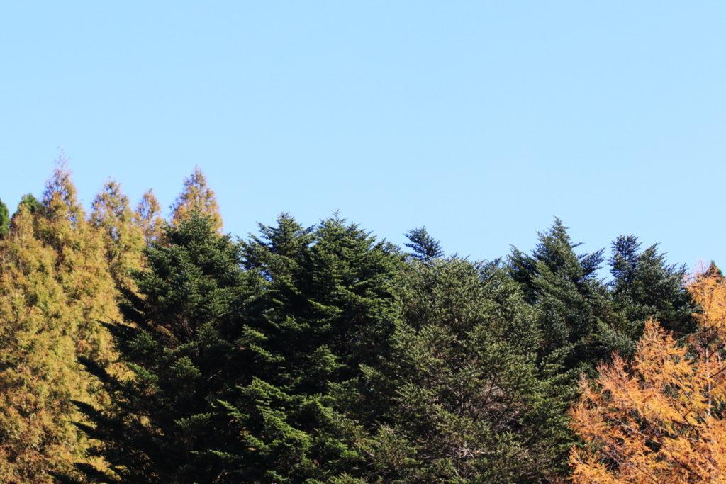 六甲高山植物園の紅葉 2017年11月10日撮影