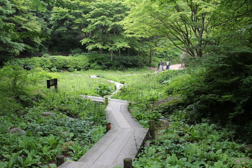六甲高山植物園で見られる植物