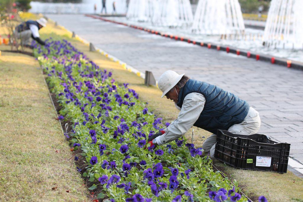 花壇の手入れを丁寧に行なっている様子 須磨離宮公園