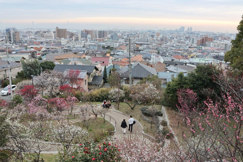 岡本梅林公園からの景色 梅の花が満開