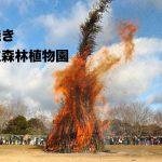 神戸森林植物園のとんど焼き 2017年1月14日
