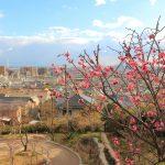 岡本梅林公園 okamoto plum park