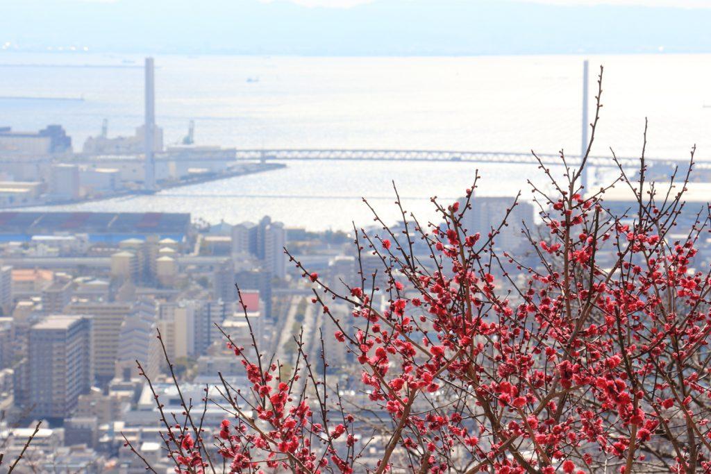 保久良神社前から見る神戸の街並み