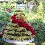 ポインセチアのツリー 温室 須磨離宮公園 sumarikyupark