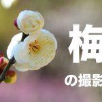 梅の写真を上手に撮影する方法とコツ