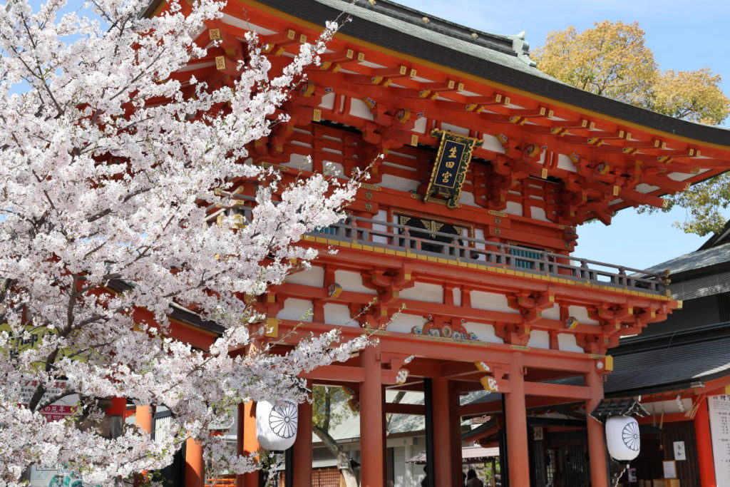 生田神社(神戸市中央区)の桜