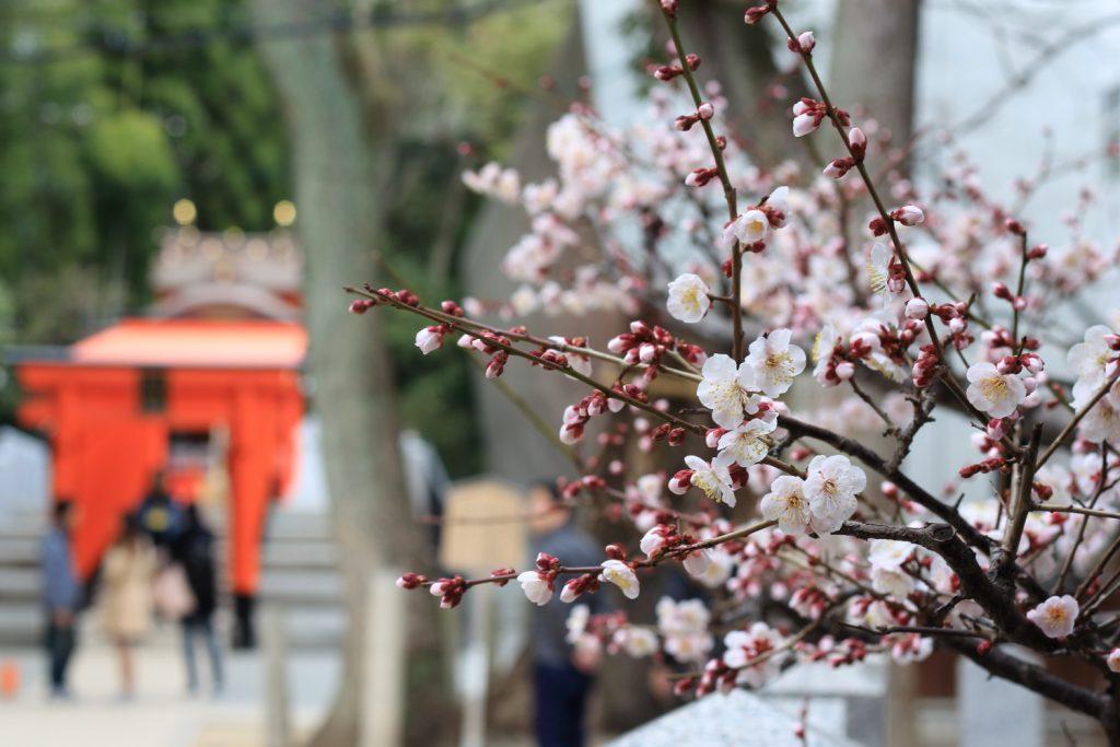 生田神社と梅