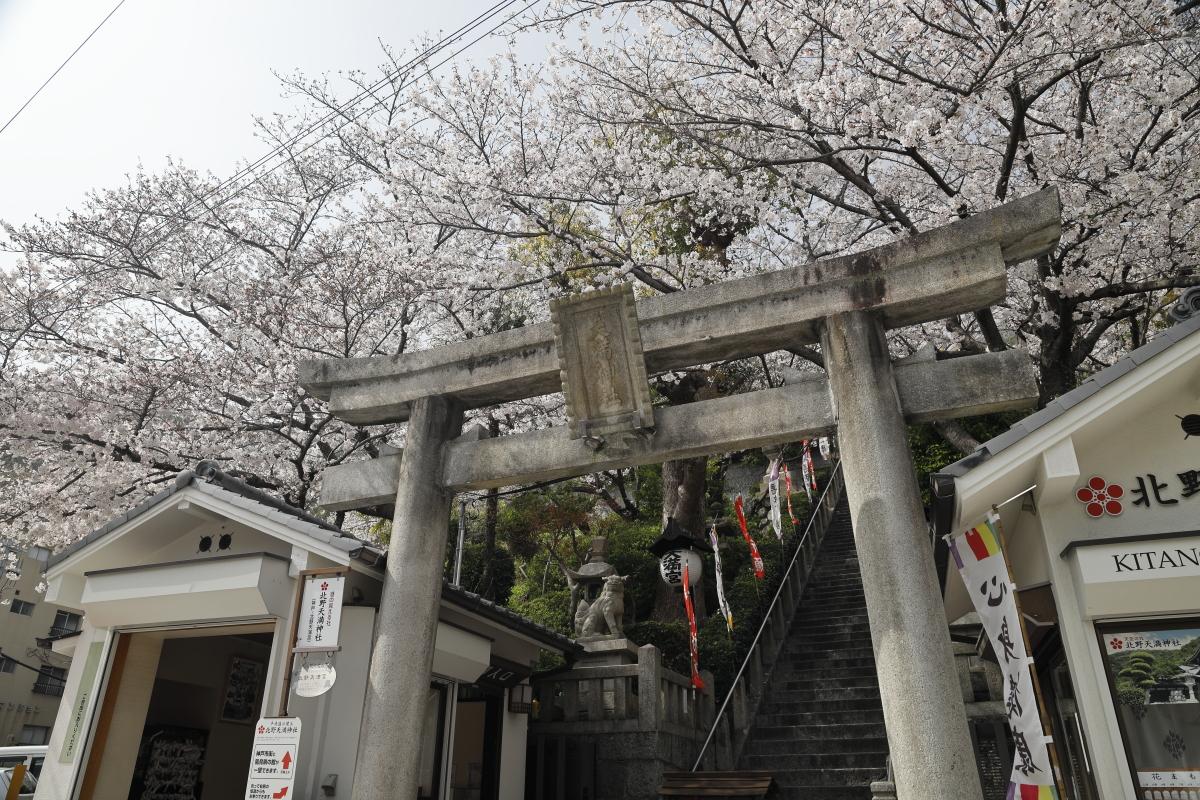 北野天満神社の桜 2021年3月29日撮影