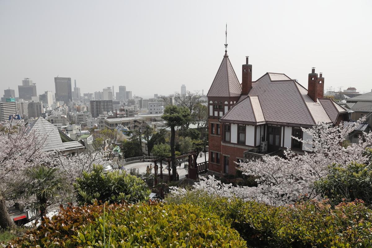 北野天満神社の桜開花状況・写真