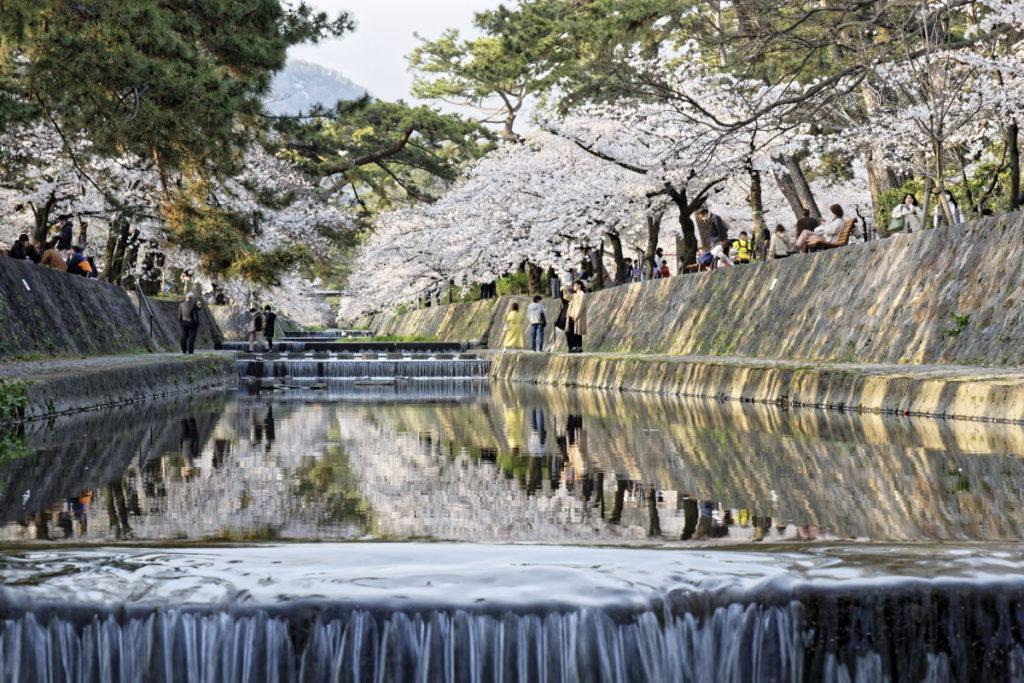 水面に反射する桜 リフレクション 作例写真