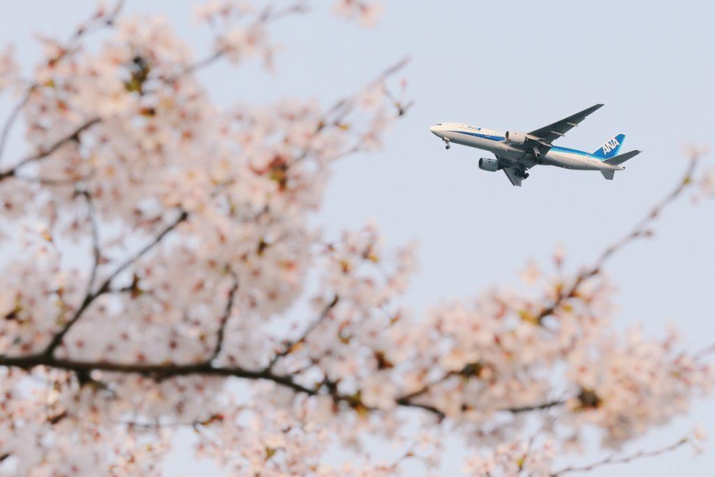 飛行機と桜