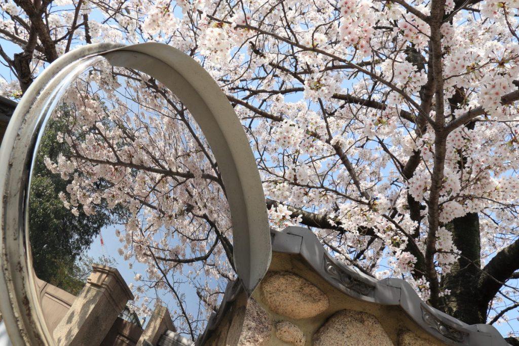 ミラーと桜 香雪美術館前