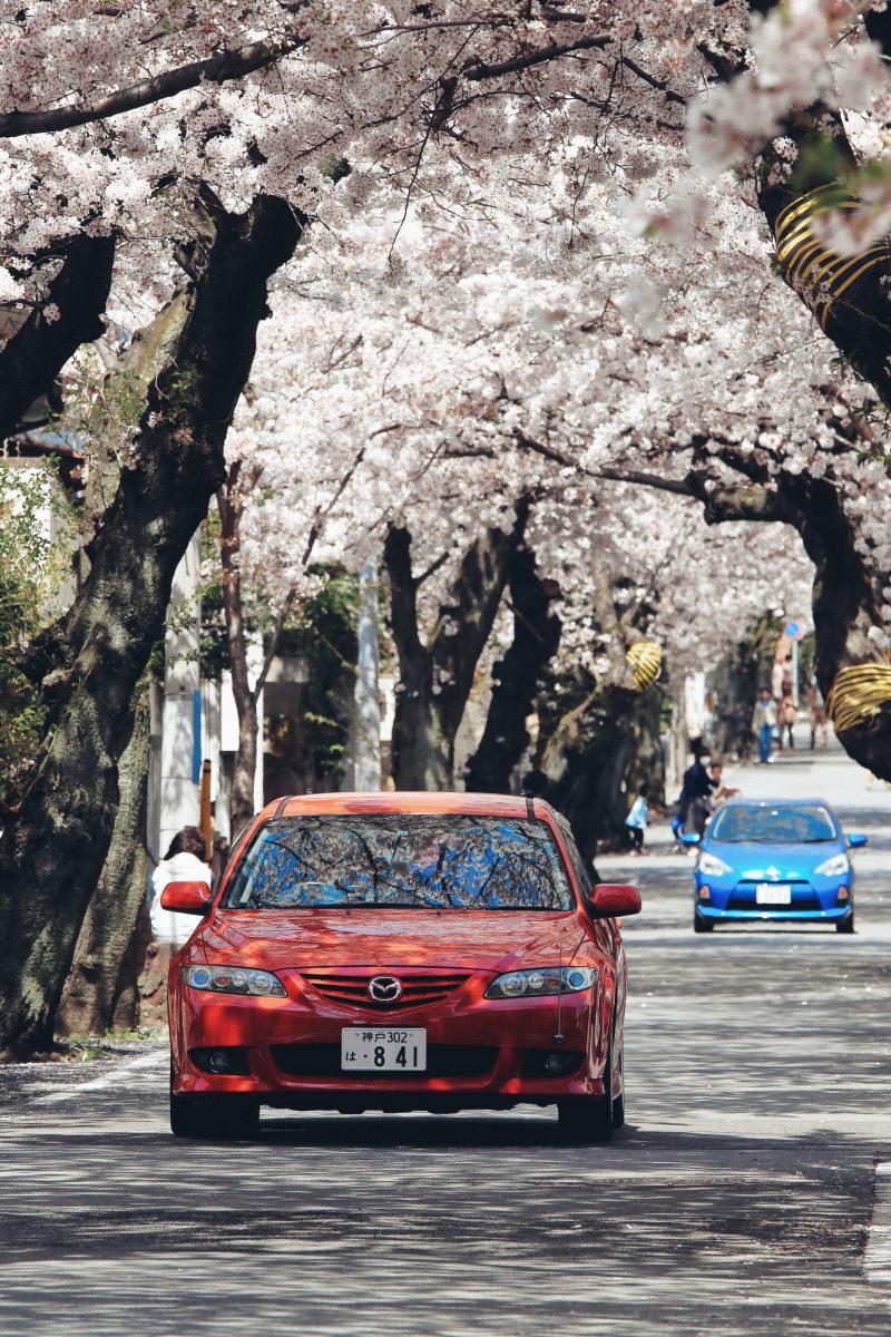 桜のトンネルにて車のリフレクション