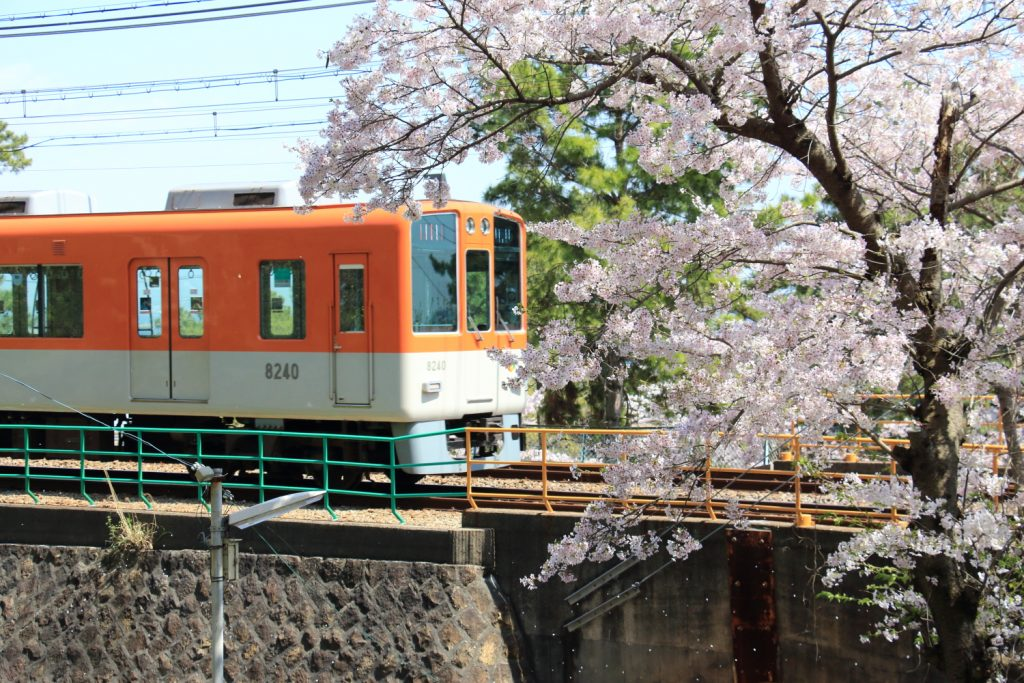 須磨浦公園の桜と山陽電鉄