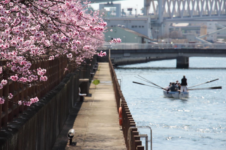 水辺の遊歩道 うおざき アーモンド並木 神戸市東灘区