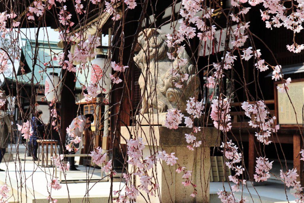 しだれ桜とお参りする人
