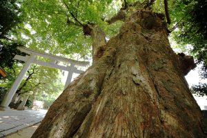 弓弦羽神社の木