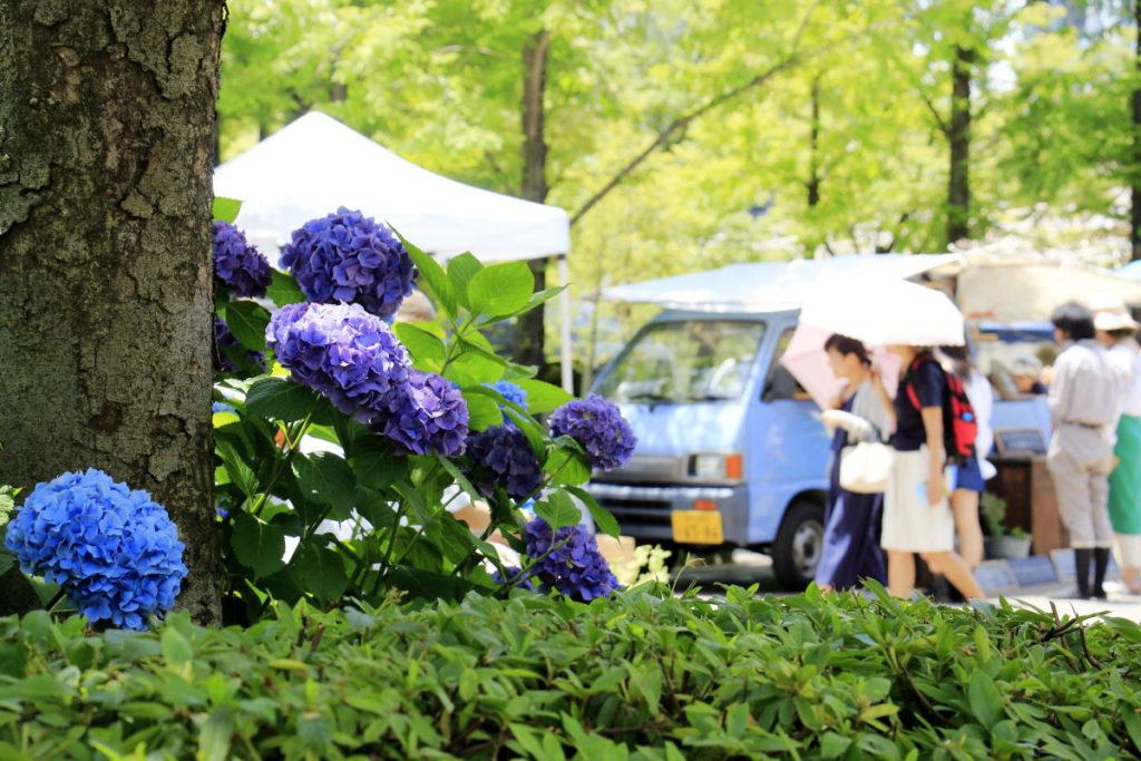 紫陽花のある風景写真 神戸ファーマーズマーケット