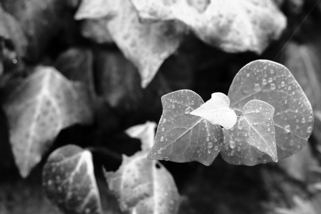 雨に濡れる植物