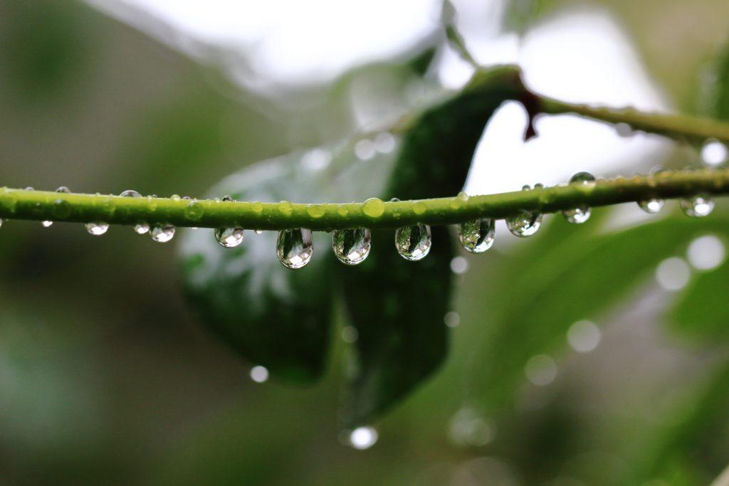 連なる水滴