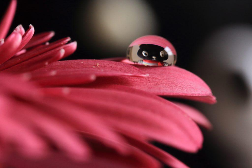 花としずくフォト コーベアー