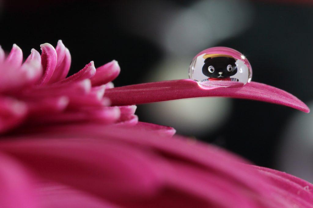 タムロン SP 90mm F2.8 Di MACRO 1:1 VC USD F004E 通称タムキューの作例写真 水滴に映り込む花