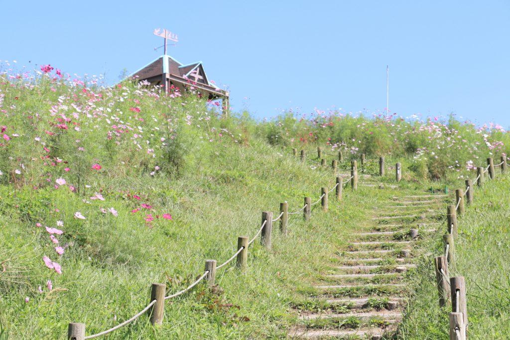コスモス 神戸総合運動公園