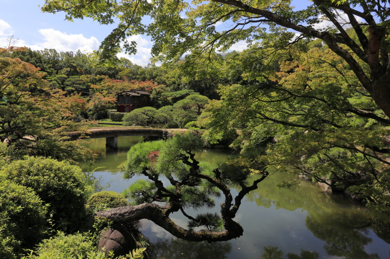 相楽園 池