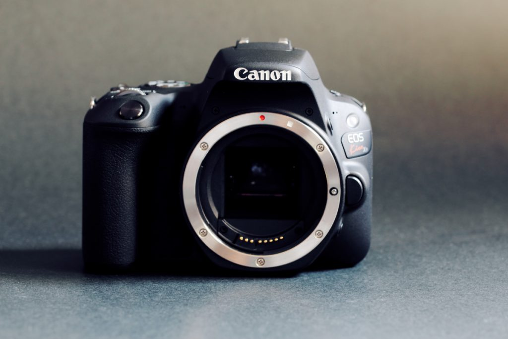 タムロン SP 90mm F2.8 Di MACRO 1:1 VC USD F004E 通称タムキューの作例写真 カメラ