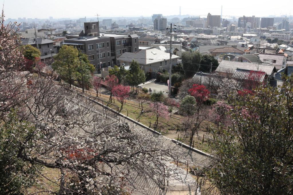 岡本梅林公園 2020年2月10日の梅の開花状況
