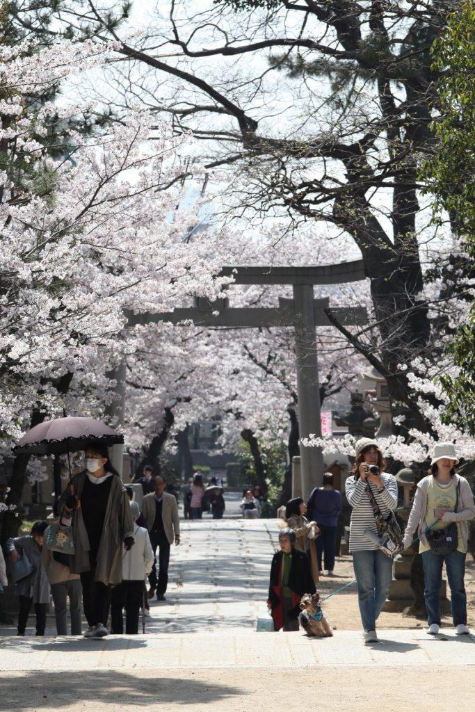 弓弦羽神社の桜2018年3月29日