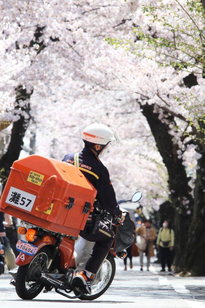 桜のトンネル(神戸市・灘区)