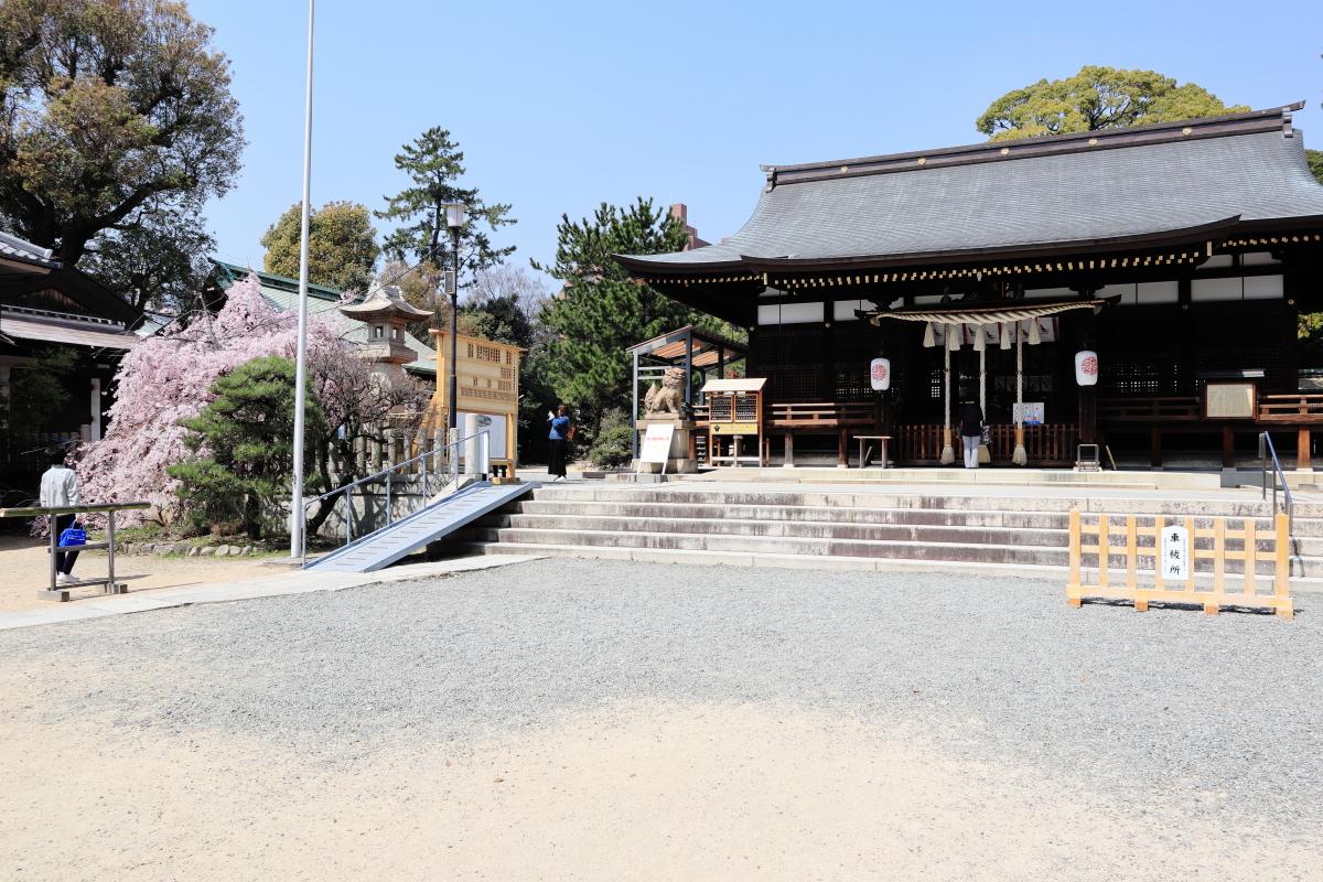 弓弦羽神社の桜