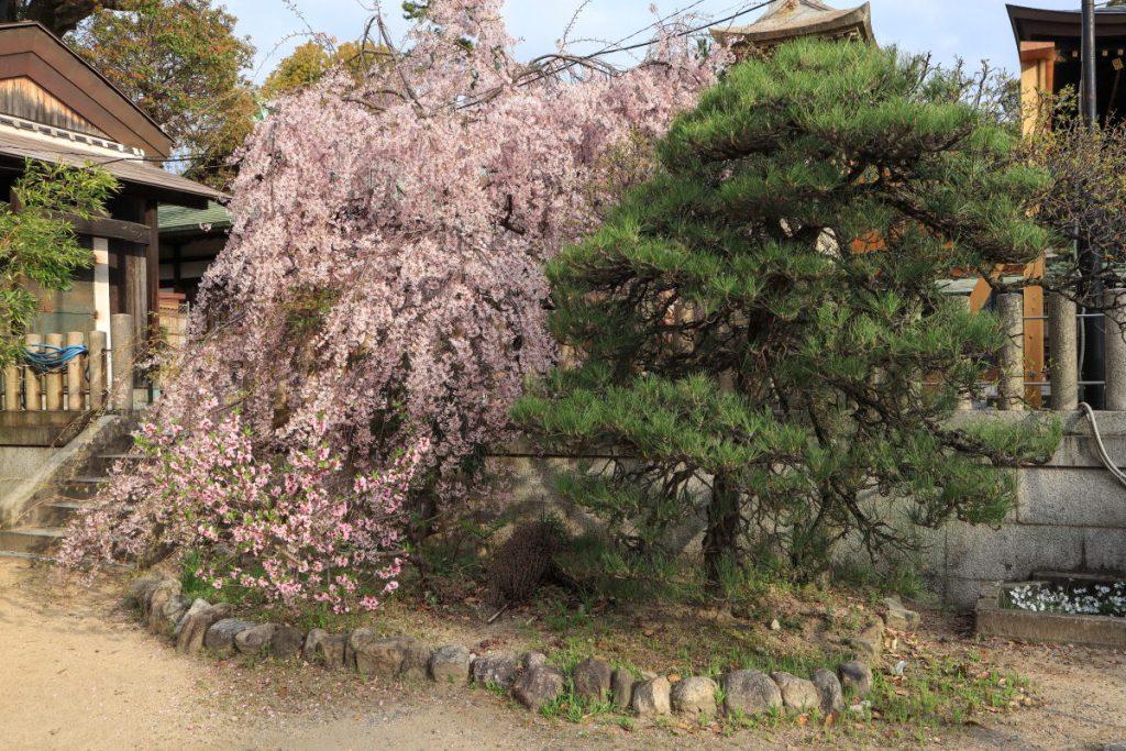 弓弦羽神社 2018年4月1日