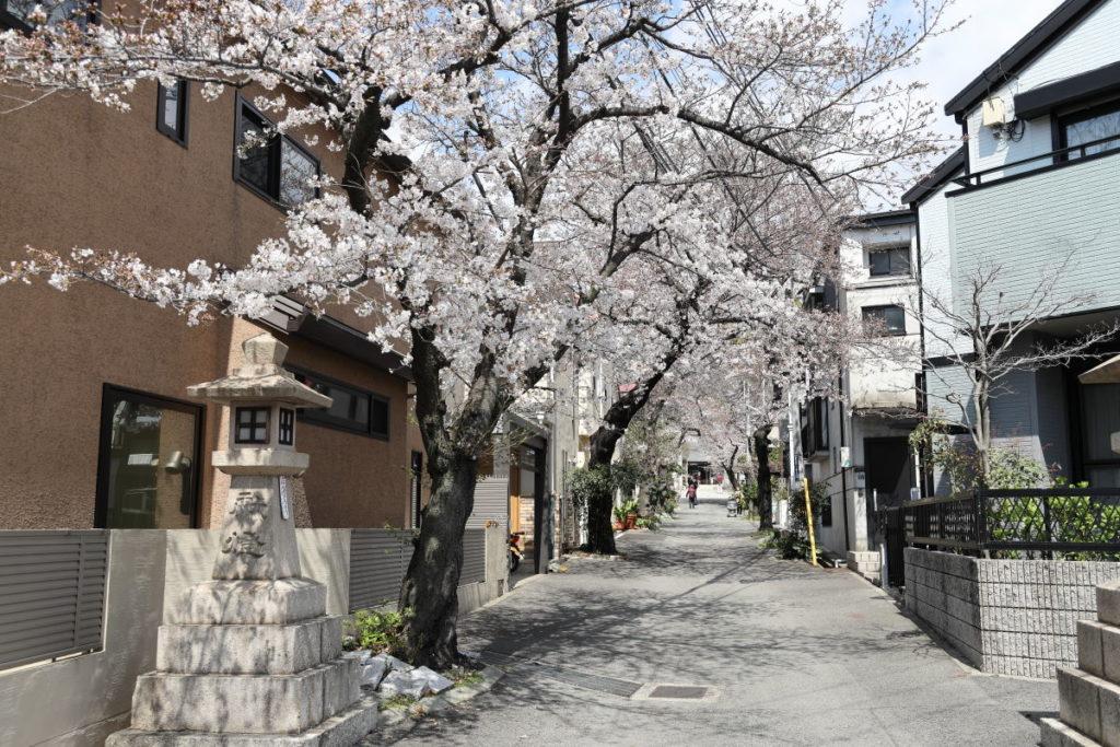 弓弦羽神社の桜の開花状況 2019年4月2日