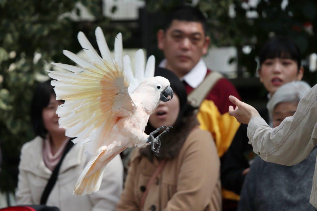 神戸どうぶつ王国のバードパフォーマンスショー