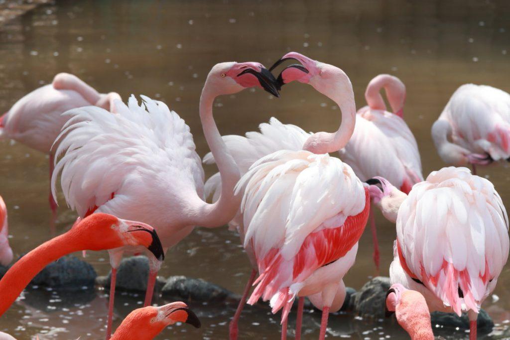 王子動物園のフラミンゴ