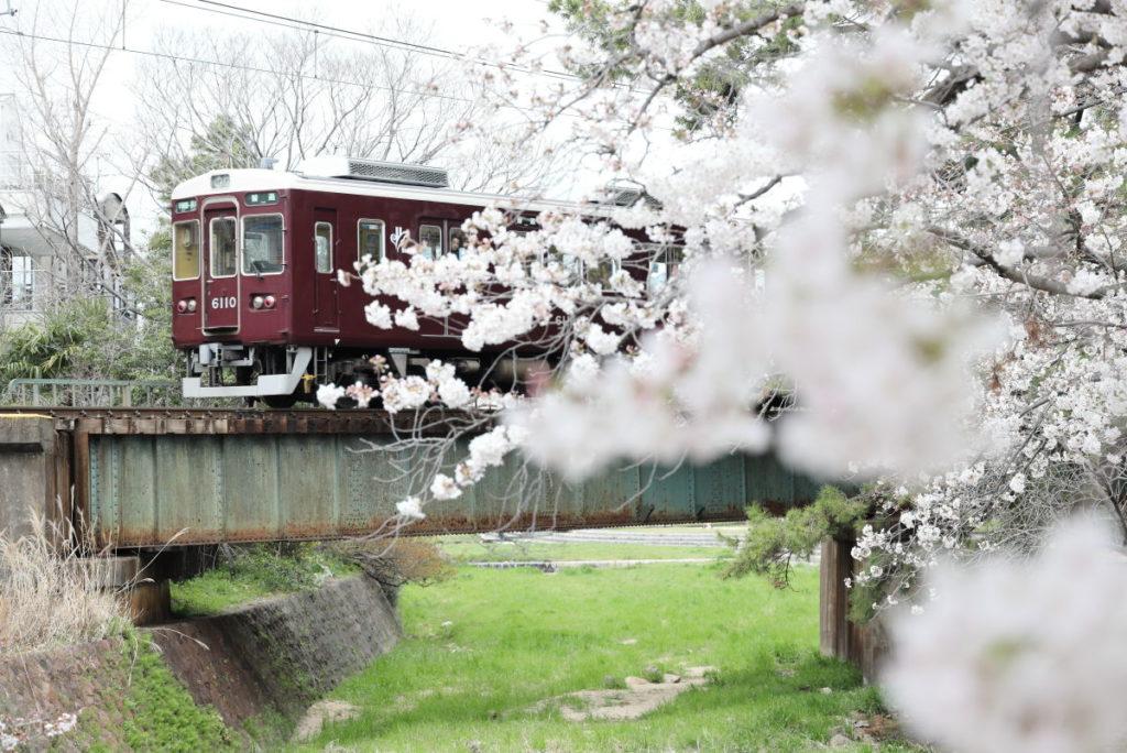 夙川の桜と阪急電車