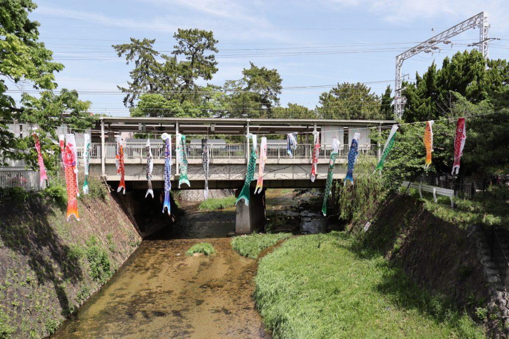 夙川(兵庫県・西宮市)の鯉のぼり