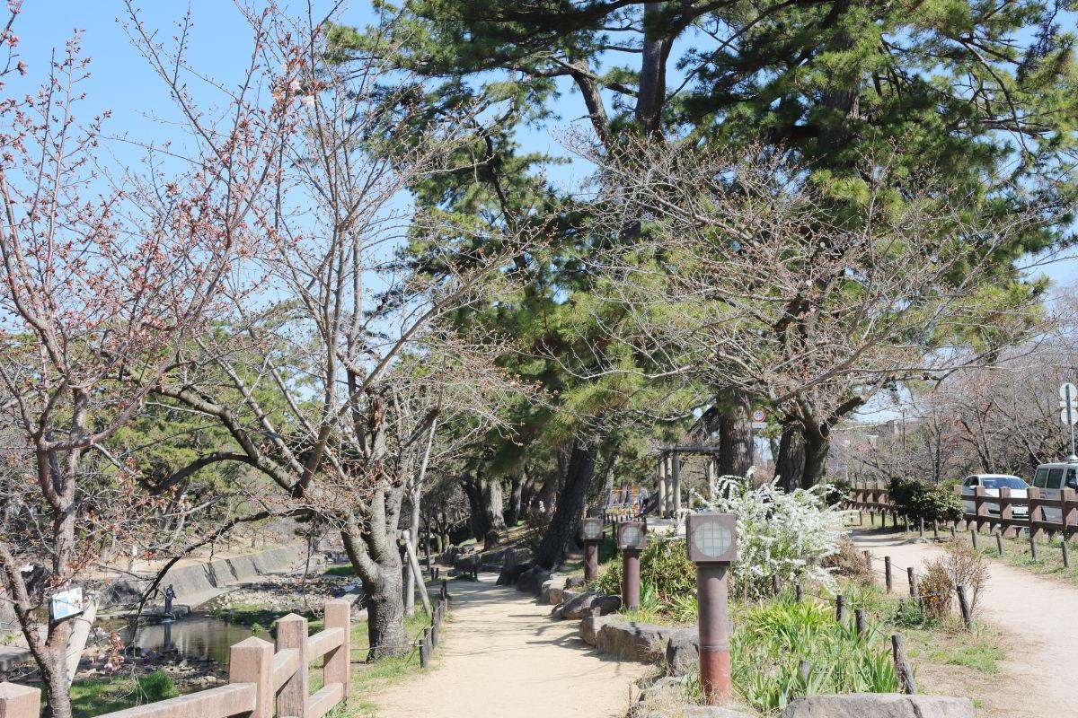 夙川公園(兵庫県西宮市)の桜開花状況 2020年3月25日